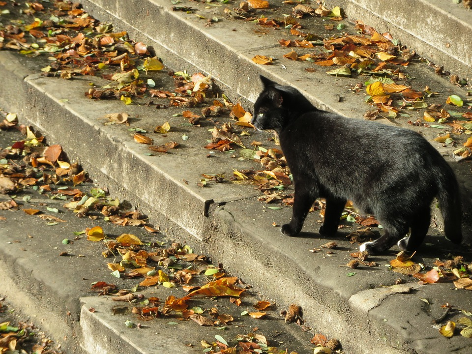 Temná tmavá kočička